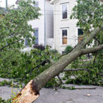 5 Benefits You Can Get from Tree Pruning and Trimming