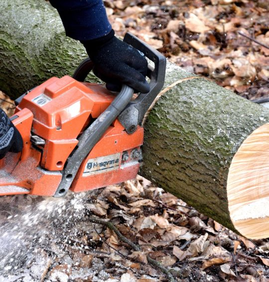 Signs to remove a tree in your house